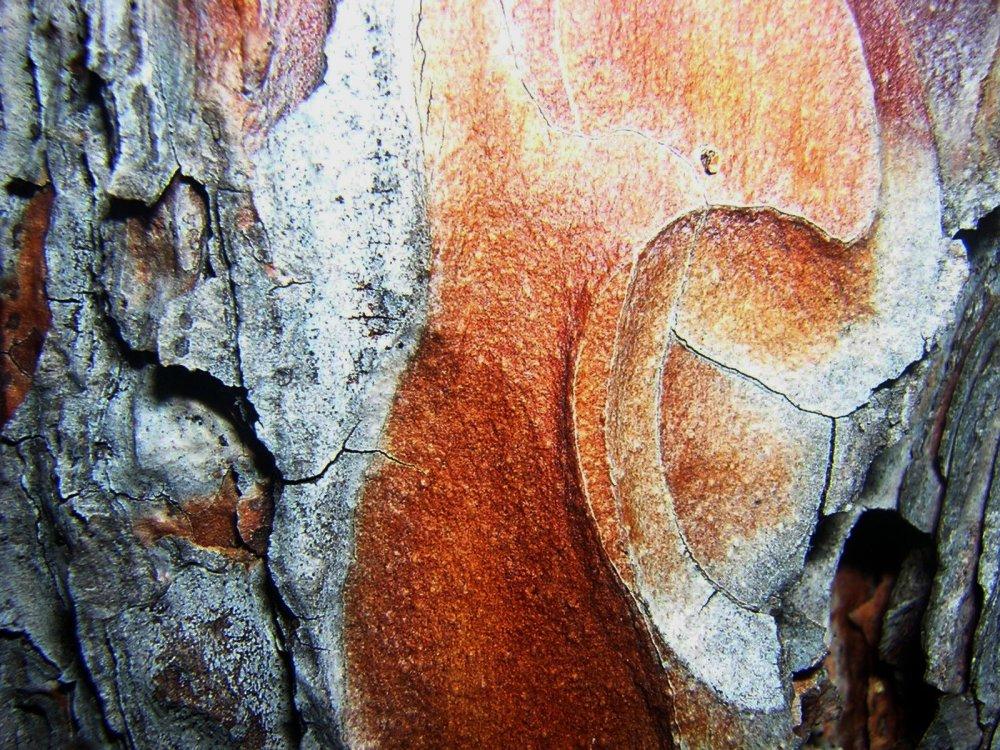 poet_tree.jpg